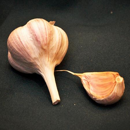 Organic Bogatyr Garlic Seed
