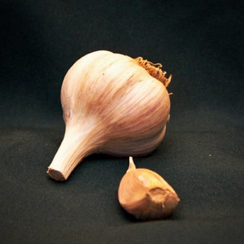italian red seed garlic for sale