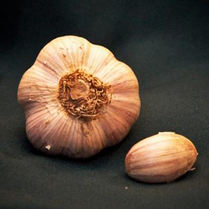 russian red garlic seed for sale